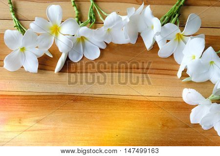 Frangipani tropical flowers, Closeuo Plumeria flowers fresh and wooden background.Vintage Filter Effect -White plumeria, Frangipani tropical flowers, Soft focus and blurred abstract and background.