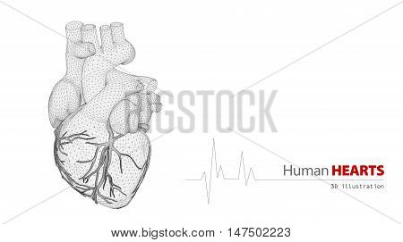 3d Illustration of Anatomy of Human Heart on a white background
