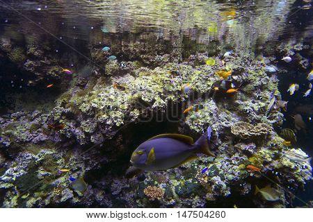 Aquarium full of tropical fishes close view
