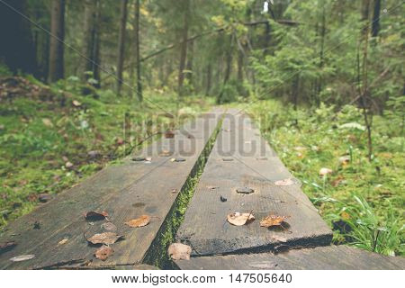 Duckboards with Fallen Leaves Leading inside Forest at Autumn.
