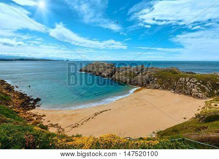 Blossoming Sunshiny Ocean Coastline Landscape.
