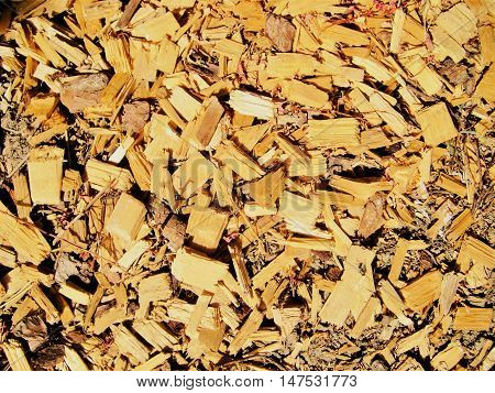 Log yellow and brown wooden chippings splinters