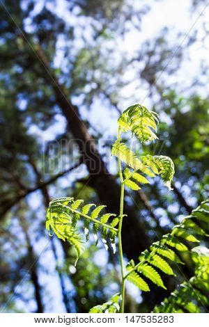 Tropical Fern In The Forest