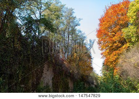 colorful leaves on the trees against the blue sky autumn forest