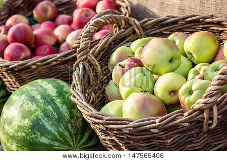 Ripe fresh green and red organic apples in basket on the market. Harvest time. Fresh fruits shopping at the local outdoor farmers market