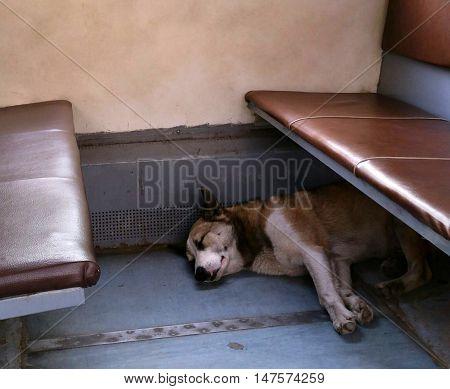 Homeless dog sleeping in the local train