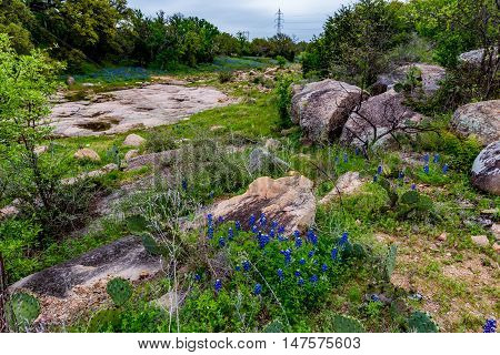 Beautiful Creek Surrounded with the Famous Texas Bluebonnet (Lupinus texensis) Wildflowers.