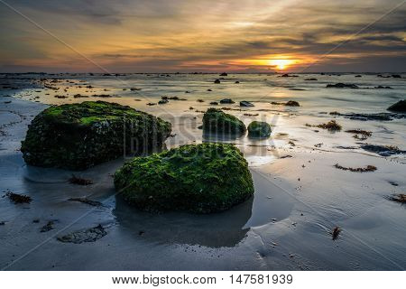 The green moss fertile on the rock during low tide sea water sunse