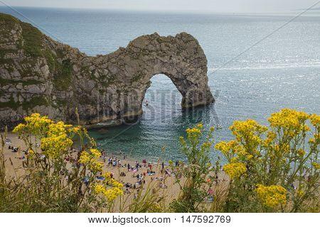 Durdle Door with yellow flowers, Dorset, England