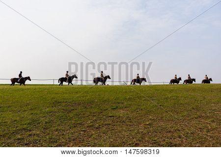 Race Horses Training