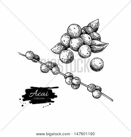 Acai berry vector superfood drawing set. Isolated hand drawn illustration on white background. Organic healthy food. Great for banner poster label sign