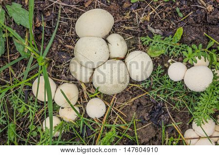 Fungus-slicker Grows On Wet Soil