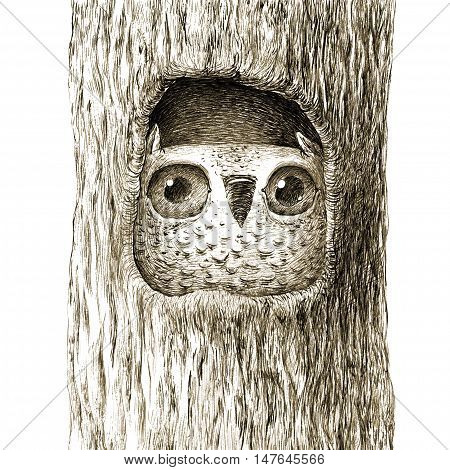 Cute Baby Owl Sitting In the Tree Hollow. Isolated on White. Original High Resolution Graphic Artwork.