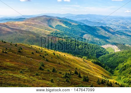 Forest And Meadow On A Hill Side
