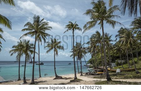 palm trees on Raya island in Thailand