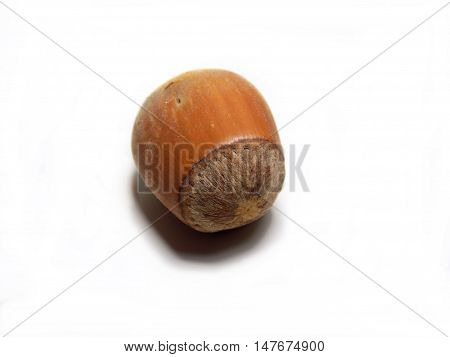 Isolated hazelnut on white background, healthy nut food in nutshell