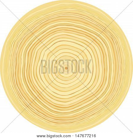 Accurate smooth raw wood log cut slice texture. Isolated on white background