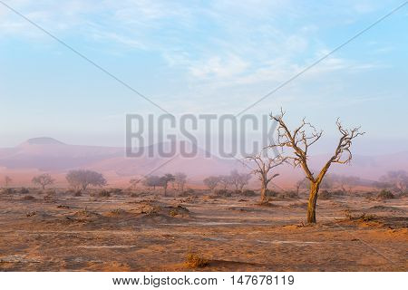 The Namib Desert, Roadtrip In The Wonderful Namib Naukluft National Park, Travel Destination In Nami
