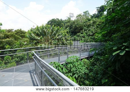 Forest Walk Of Telok Blangah Hill Park Rainforest, Singapore