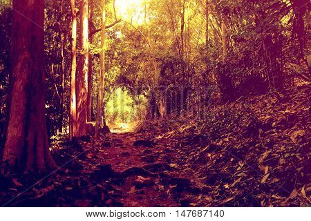 Nature way in forest and Majestic autumn light glowing by sunlight