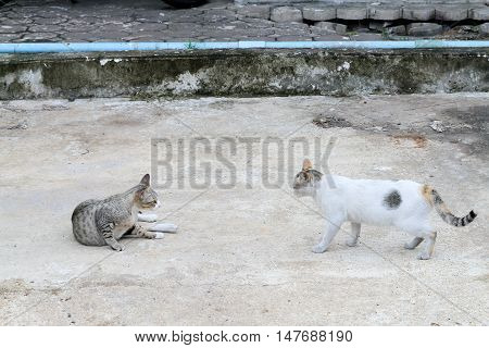 confrontation of cats on floor abstract background .