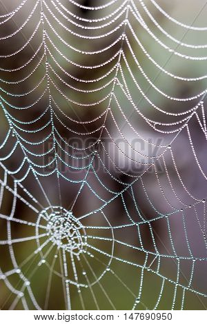 Spider web with morning dew drops closeup