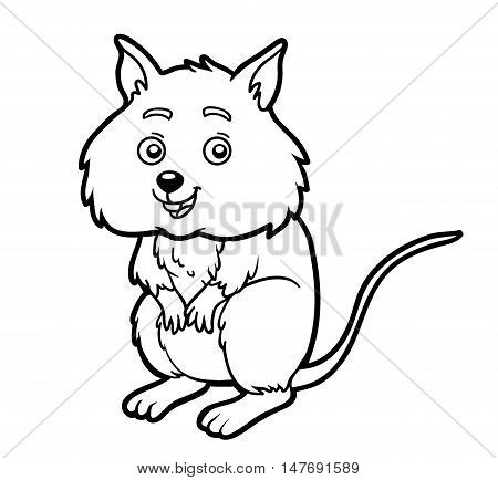 Coloring book for children, colorless animal, Quokka