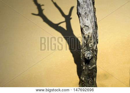 Dead Tree And Shadow
