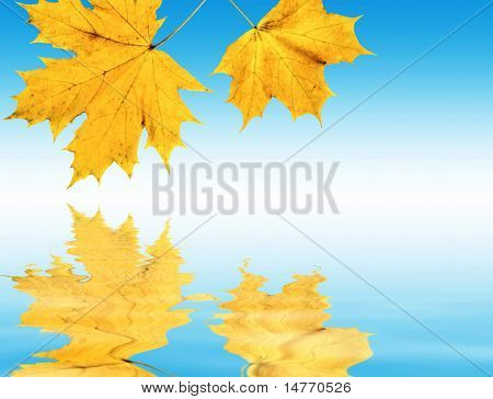 Autumn maple leaf with feflection (collage)