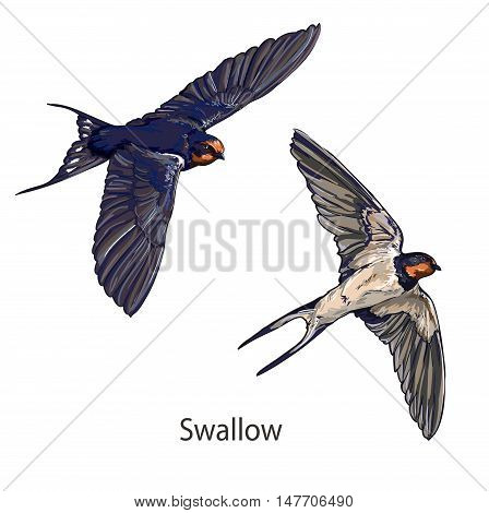 Swallow vector, vector illustration isolated birds. birds flying, animals, bird silhouette, bird vector. Swallow set