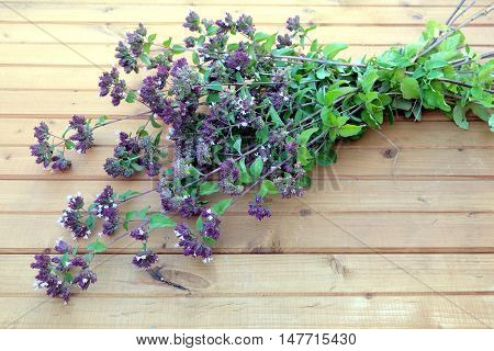 Mentha arvensis. Bouquet of branches of field mint on brown wood background top view closeup