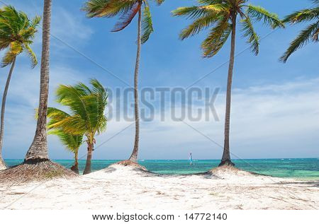 Wild caribbean beach in Dominican Republic