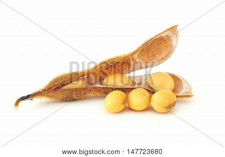 Soy bean seeds on a white background
