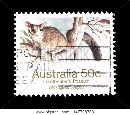 AUSTRALIA - CIRCA 1981 : Cancelled postage stamp printed by Australia, that shows Leadbeaters opossum.