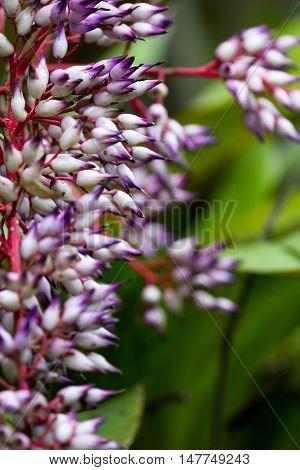 Closer Tropical Plant