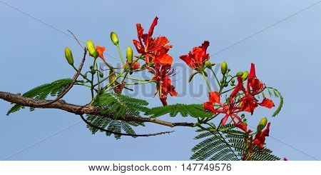 Tropical Wild Flowers