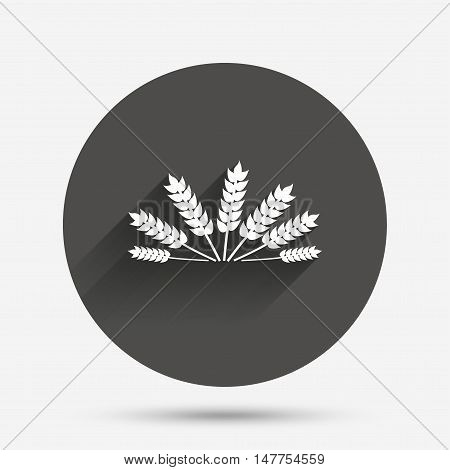Agricultural sign icon. Wheat corn. Gluten free or No gluten symbol. Circle flat button with shadow. Vector
