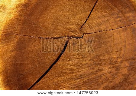 Wood texture background / wood texture with natural pattern / old wood texture background