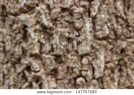 Blur Cluse up of Indian cork tree (Millingtonia hortensis Linn.f) flowers.