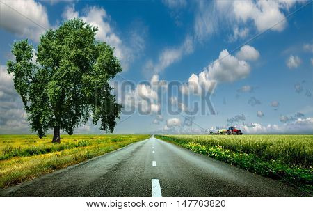 Beautiful, big, green tree stands in a field with wheat on the sidelines of an asphalt road. Right in the background red tractor in a field