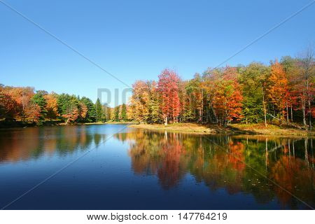 Colorful autumn tree reflections in Allegheny national forest.