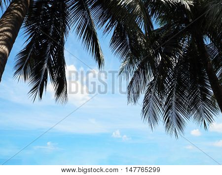 Group of coconut palm trees and blue sky