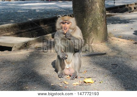 monkey eating peanut on the ground in the park