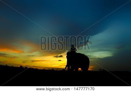 Mahout And Elephant.