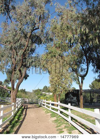 Bridle trail in Ernie Howlett Park, Rancho Palos Verdes, CA poster
