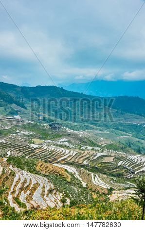 The Longji rice terraced fields scenery in spring