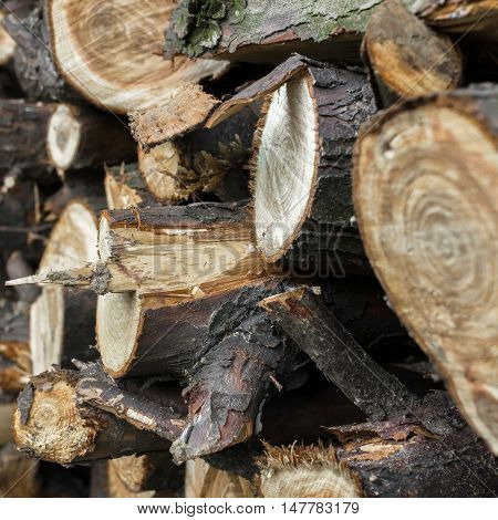Natural wooden background. Extreme closeup of chopped firewood. Firewood stacked and prepared for winter. Pile of wood logs.