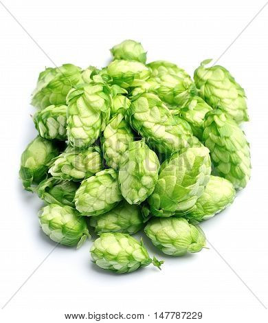 Blossoming hop on a white background .