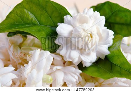 Jasmine Flowers Isolated On Wooden Board Background