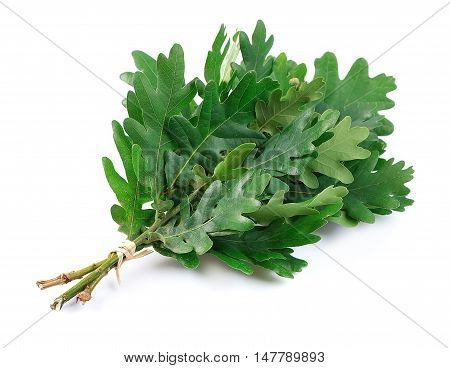 Oak broom isolated on white close up